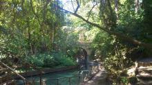 Πάρκο Ροδίνι